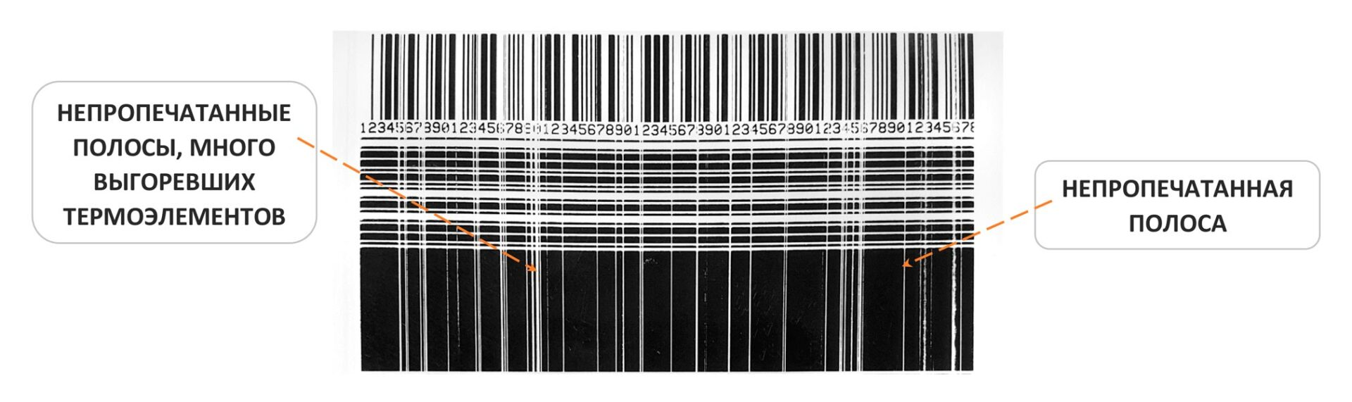 оборудование_для печати_этикеток_cab_sato_zebra_ 56655